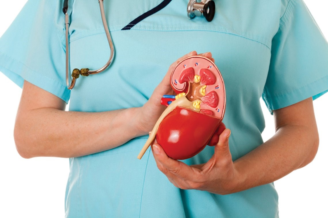 Kidney Health – Ayurvedic Approach