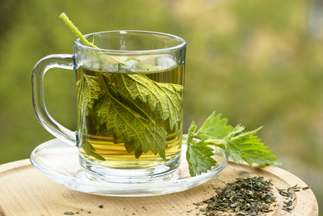 Nettle leaf tea health benefits